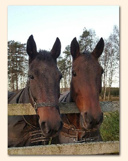 horses_x2b